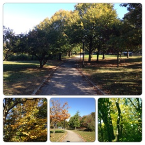 a gorgeous walk through the park with the pupcicle!