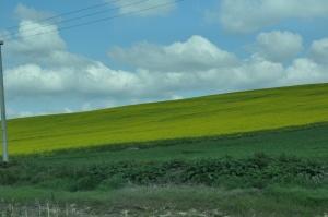 green fields on one side...