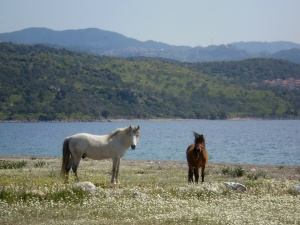not much around but a few houses, a couple of hotels, and these horses, which freely roam the countryside...