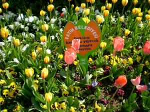 ...tulips everywhere!